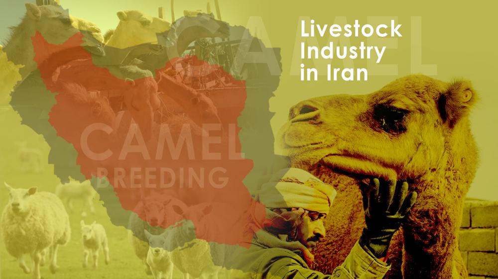Livestock Industry in Iran