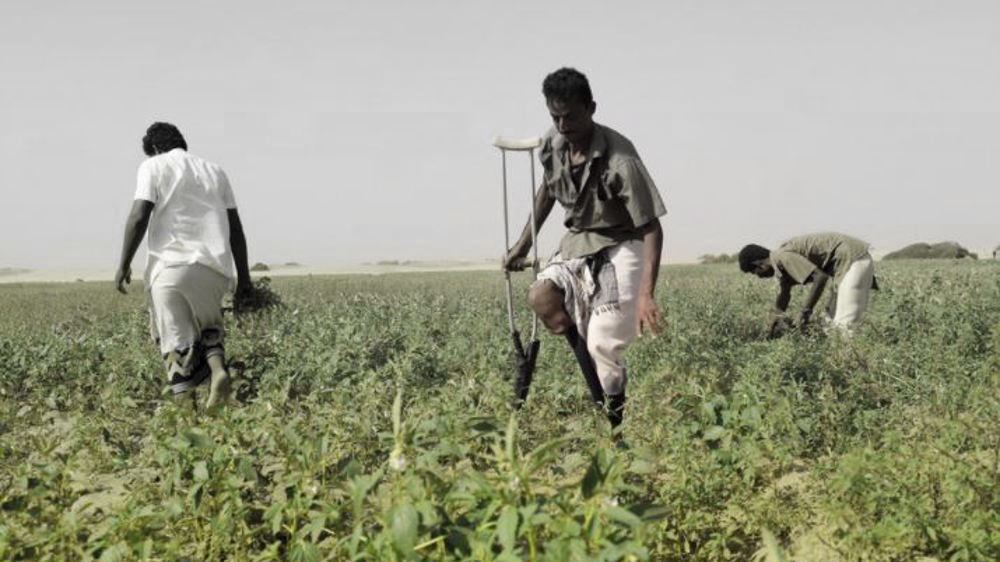 Saudi-led war inflicted $111bn in damage to Yemen's agriculture sector: Ministry