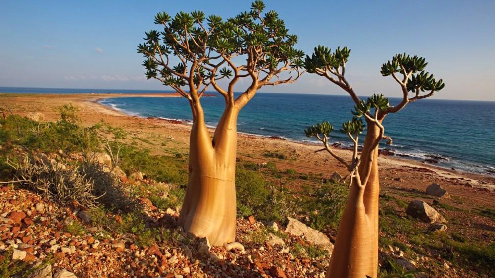 Yemen blasts UAE for transferring Israeli tourists to Socotra