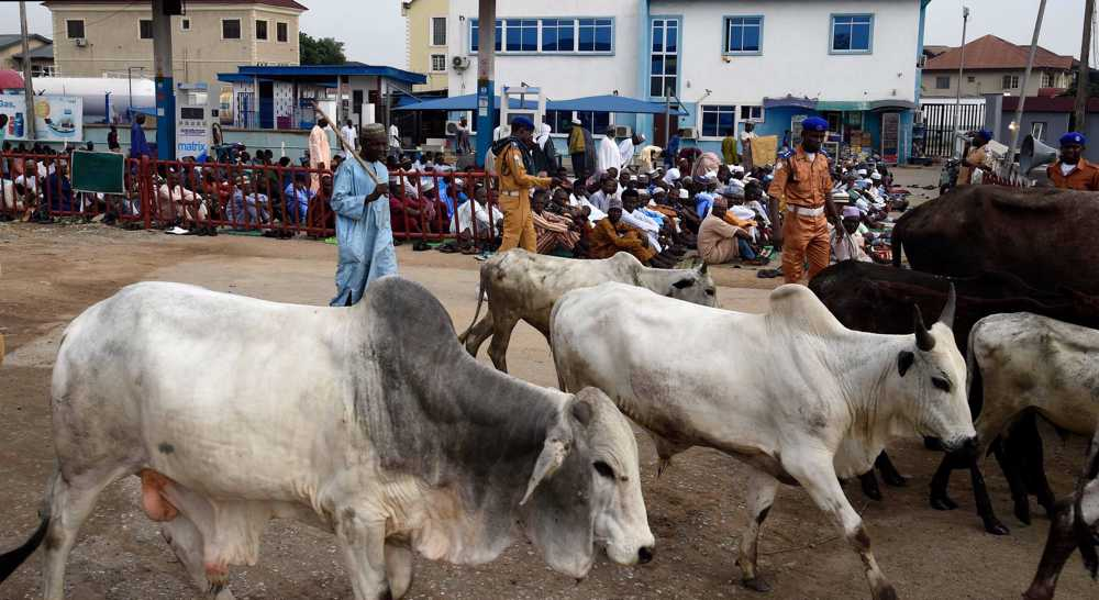 Armed cattle thieves kill 88 people in northwest Nigeria