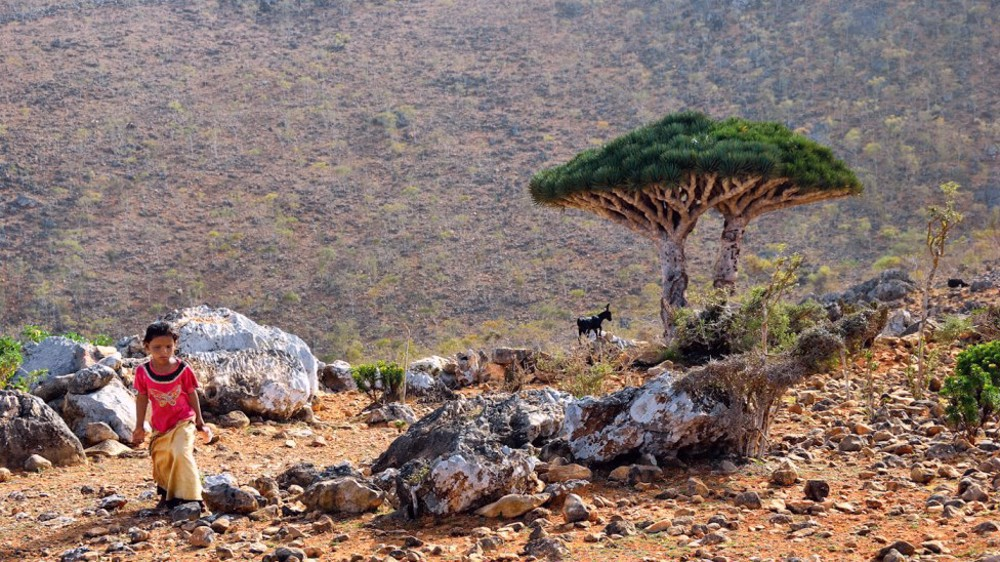 Report: UAE issues Emirati ID cards for residents of Yemen's Socotra
