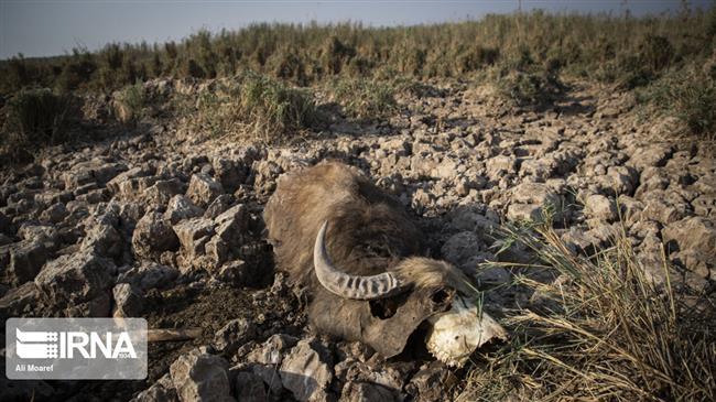 Flood irrigation caused water crisis in Iran's Khuzestan: Report